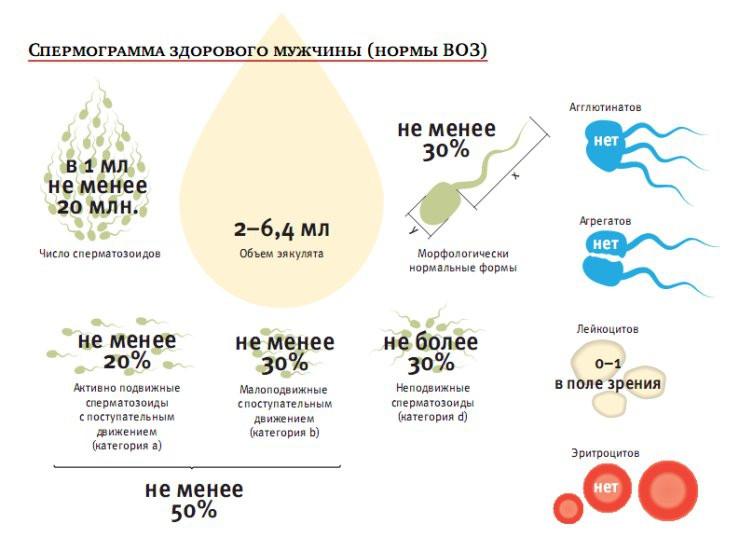 povisit-podvizhnost-spermatozoida