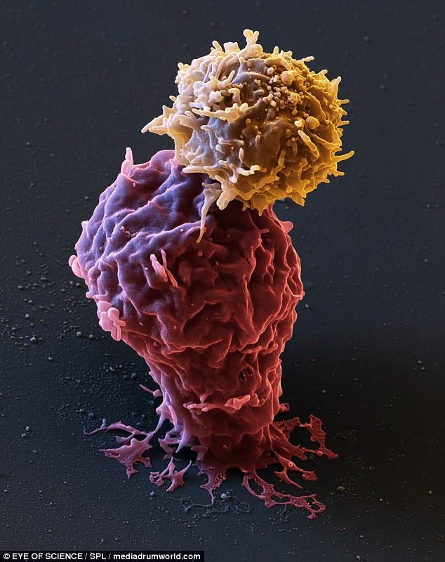 находится набережная раковые клетки картинки трехкомнатную