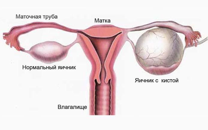 Работа яичников у девушек работа в москве и московской области для девушек
